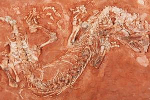 Fossil find sheds new light on evolution of reptiles | Geology Page