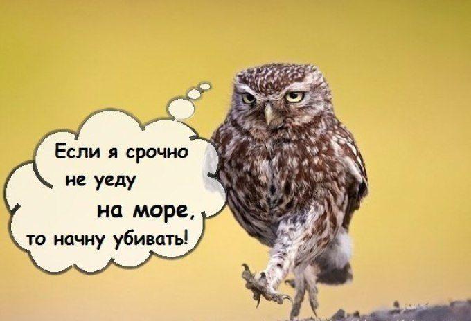 Статусы для ватсапа прикольные в картинках на русском языке свежие, универсальные