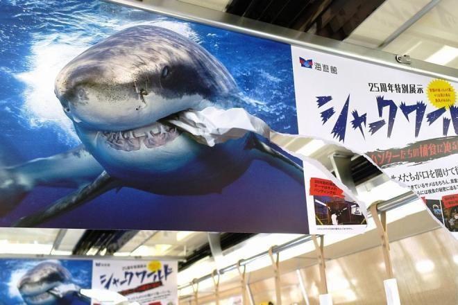 電車の車両内の中吊りポスター。いつもあまり気にも留めないが、これは思わず二度見した。 「サメが広告を食べてる!!」