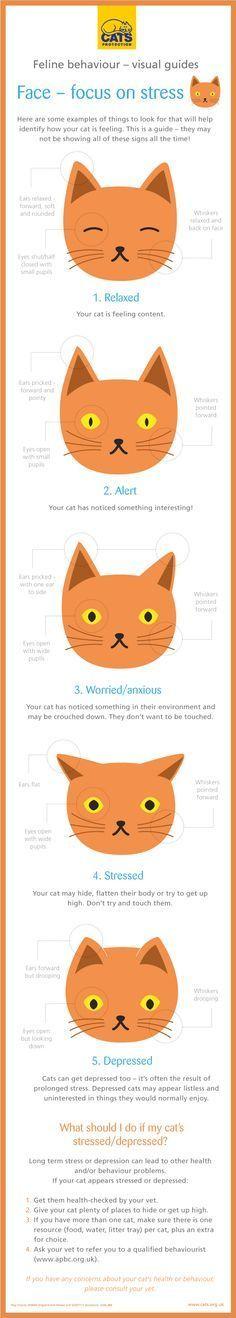 ♥ Cat Care Tips ♥  Cat behavior explained (infographic)