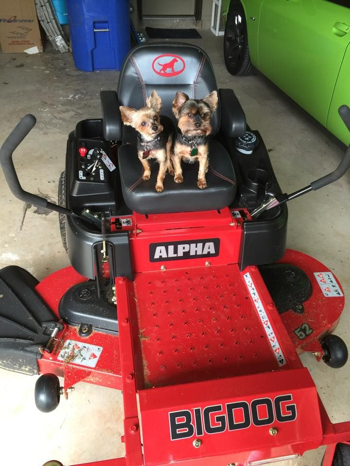 Big Dog Mower Dealers