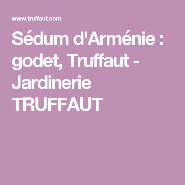 Sédum d'Arménie : godet, Truffaut - Jardinerie TRUFFAUT