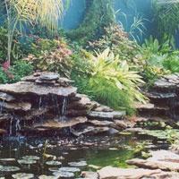 50 best koi ponds images on pinterest backyard ponds for Koi pool water gardens thornton