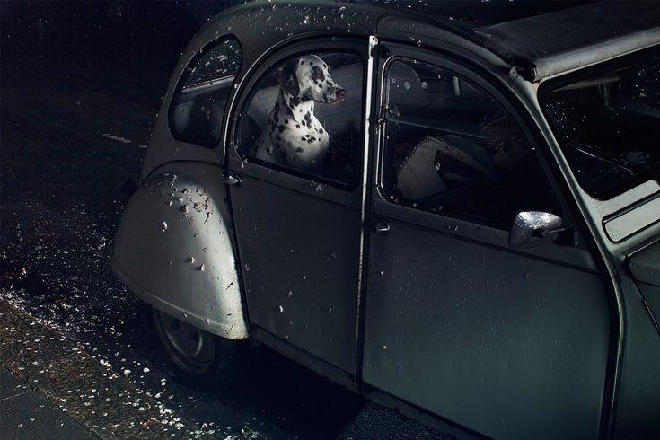 martin usborne - dogs in cars