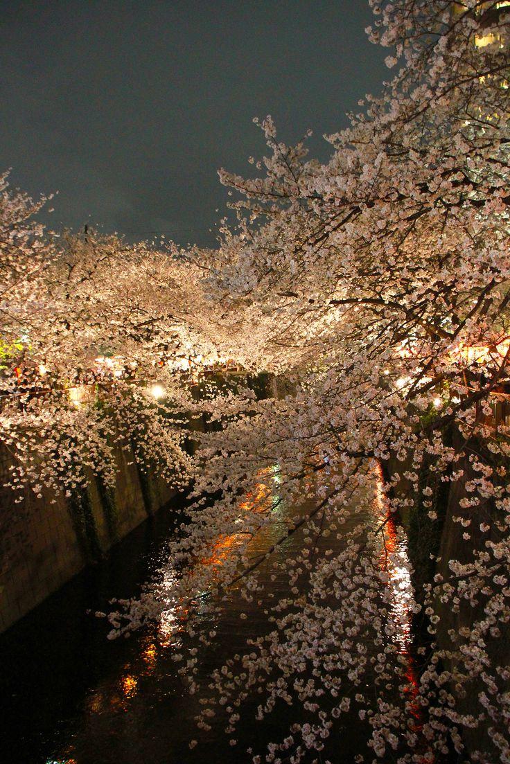 Sakura 2013 | Flickr - Photo Sharing!