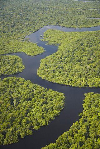 Les 25 Meilleures Id 233 Es De La Cat 233 Gorie Amazonas Brasil