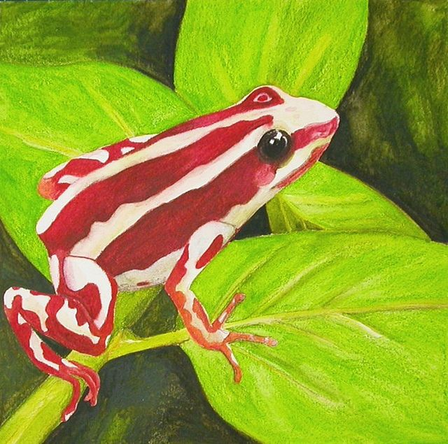 Phantasmal Poison Dart Frog WIP 6 by Gumnut Logic, via Flickr