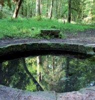 Troncs pas communs à la forêt de Tronçais. http://www.auvergne.fr/content/foret-troncais
