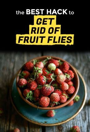 There's no hiding from a fruit fly infestation. When those tiny little bugs invade your kitchen and swarm around your fruit bowl or sink, you know it. Fortunately, the solution to this problem is fairly straightforward, and learning how to get rid of fruit flies and how to set a fruit fly trap is pretty easy. It does, however, help to understand where fruit flies come from first, so you have a better idea of how to kill fruit flies.