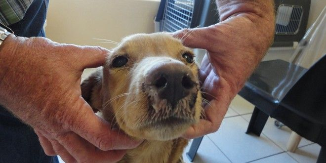 Dealing canine distemper virus in dogs!