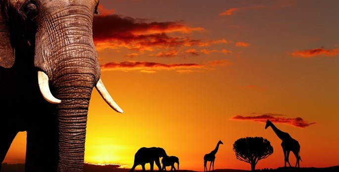 THE Beauty of African Sunset: African Safari, African Sunset, Africa South, Travel Book, South Africa, African Nature, Animal Wallpaper, Africa Travel