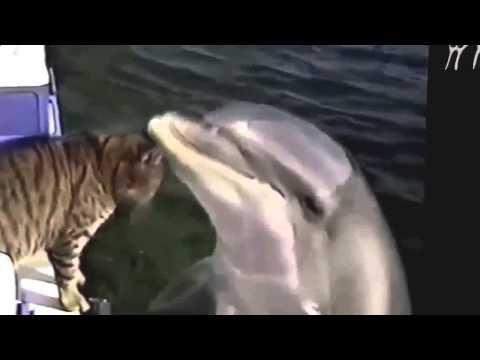 Video di animali divertentissimi. Animali divertenti compilation - http://dailyfunnypets.com/videos/dogs/video-di-animali-divertentissimi-animali-divertenti-compilation/ - Video di animali divertentissimi. Divertenti e simpatici video sui animali. Animali divertenti compilation. - (animal), animali, animals, ca, compilation, di, divertenti, divertentissimi, dog, dogs, pet, pets, simpatici, video