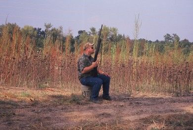 Dove Hunting Dos and Don'ts, Part 2