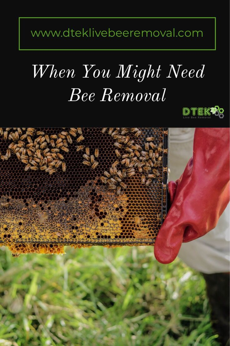 Removing Bees Can Be A Dangerous Difficult Experience Keep In Mind That Even If You Only See A Few Bees Around The Area There Bee Removal How To Remove Bee