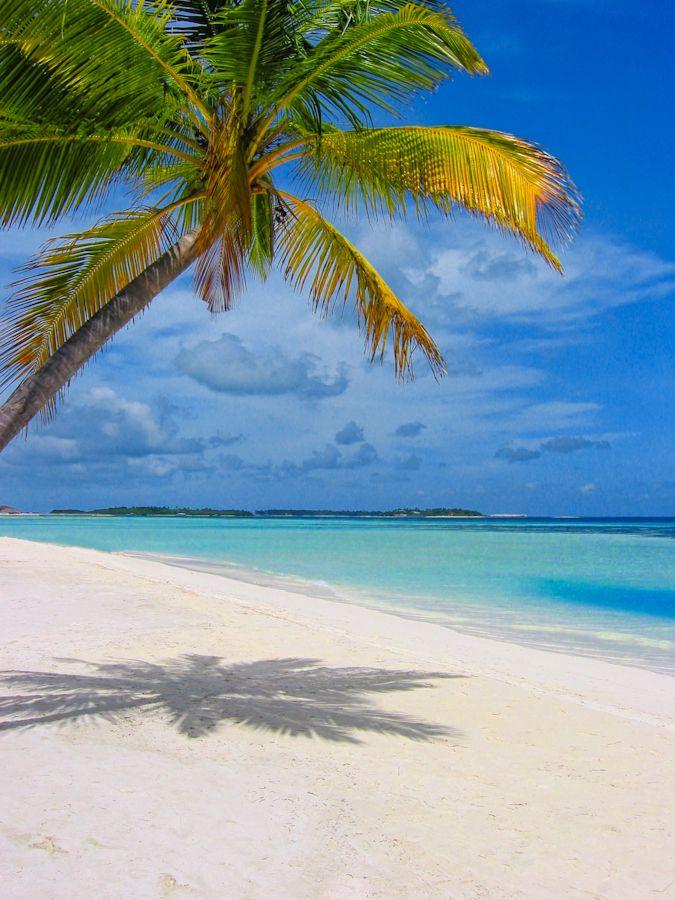 """""""The Beach"""" by Mario Moreno...Idyllic Beach of Zanzibar"""