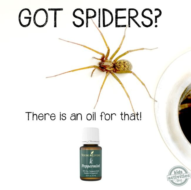 How To Keep Spiders Away From Your House Fyi Pinterest Essential Oils And Essentials