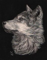 """This is a mini scratchboard thumbnail sketch of a wolf pup. I spent a wonderful day in Ontario, watching the wolves at a sanctuary. This little guy was one of the wold pups I observed. 2.5"""" x 2"""" (6.5cm x 5cm) For Sale. (Please email me if interested. sue@suewalters.com) #wolf"""