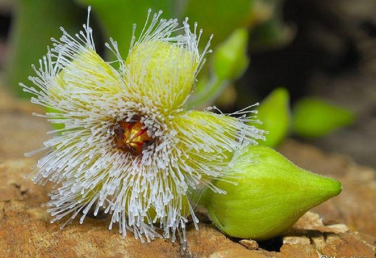 Las bellas y extrañas Stapelias | Cuidar de tus plantas es facilisimo.com