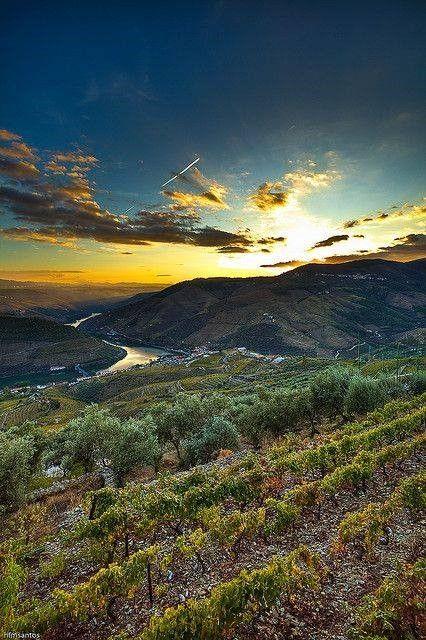 Douro Valley, Portugal via Antiga Portugueza antigaportugueza.pt