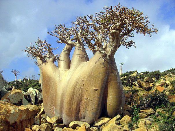 L'île de Socotra, au Yémen