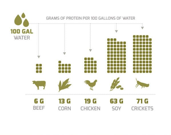 Insects - the most water efficient source of protein on the planet!