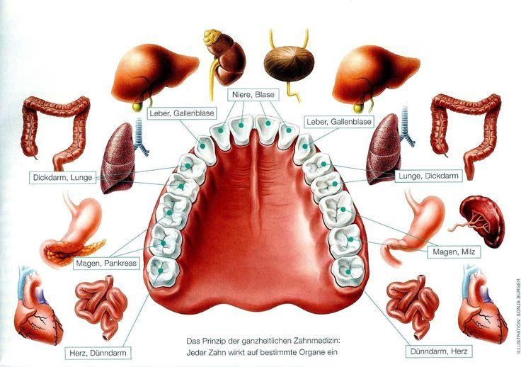 Störfelder bei den Zähnen