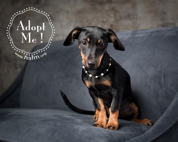Sabrina is up for adoption in Flower Mound, TX! http//www