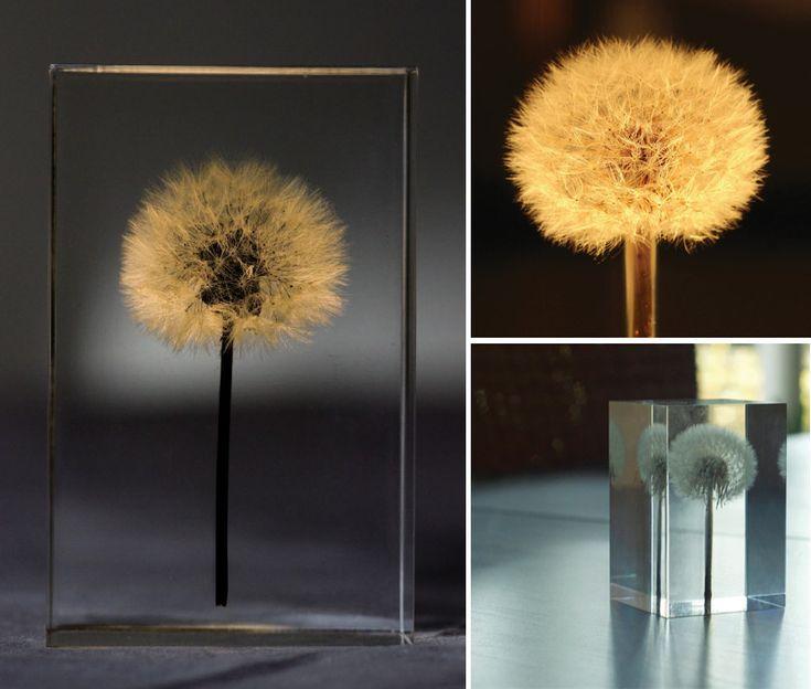 OLED Dandelion Lights by Takao Inoue  plants lighting flowers dandelions