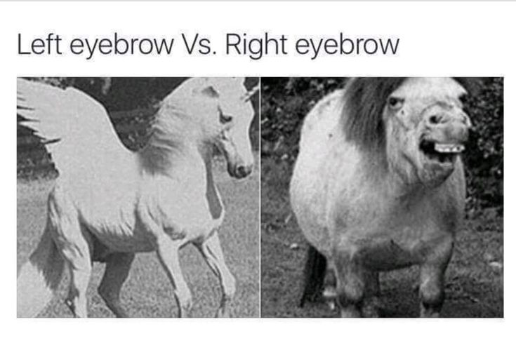 Trueeeee #MEME #FUNNY #GIRL #GIRLS #GIRLY #TROUBLES #PROBLEMS #CRAZY #EYEBROWS #MAKEUP #FACE #BEAUTY #UNICORN #HORSE