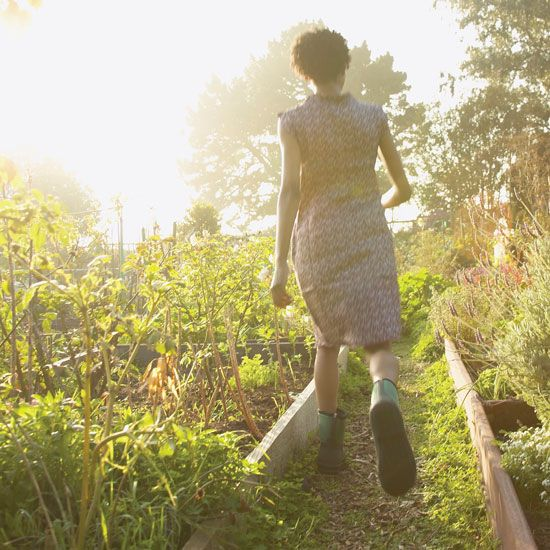 9 Hormone-Balancing Herbs - Health and Wellness - Mother Earth Living