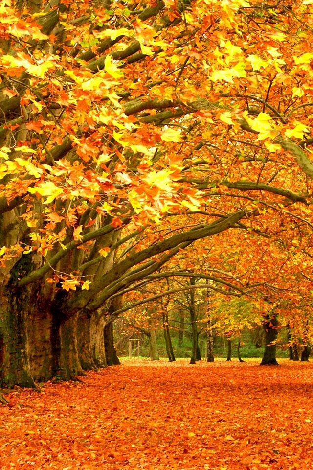22 Best Fall Scenes Images On Pinterest Autumn Leaves