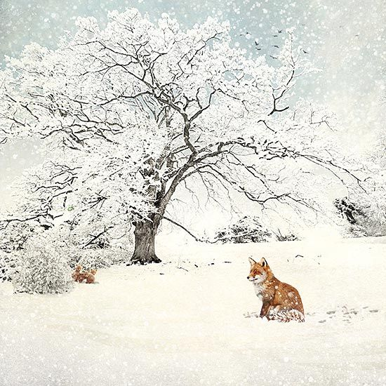 Fox and Cubs - christmas card design by Jane Crowther for Bug Art greeting cards.