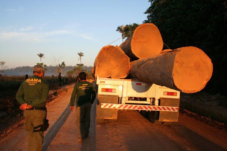 Le président brésilien a mis son veto le 19 juin contre deux lois proposées par le Parlement, pouvant conduire à la déforestation de près de 600 000 hectares en Amazonie. Il semble ainsi contrarier les ambitions des lobbys de l'agrobusiness, très puissants dans le pays.
