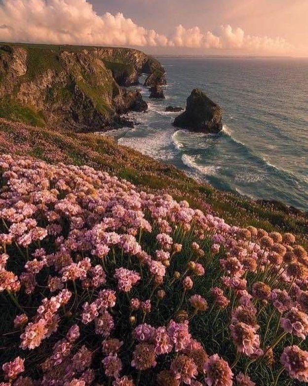 Flowers Landscape Landscaping Sea Nature Flowers Landscape Landscaping Sea Nature Nature Aesthetic T Wallpaper Nature Wallpaper