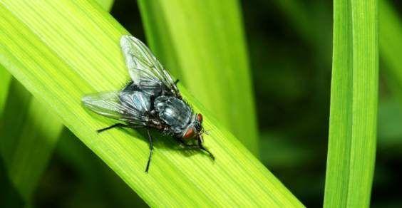 Se per voi le mosche, unite al caldo di questi giorni, si trasformano in un vero e proprio fastidio, in particolare mentre vi trovate a tavola o durante la notte, provate a tenerle lontane dalle stanze della casa utilizzando dei rimedi naturali.
