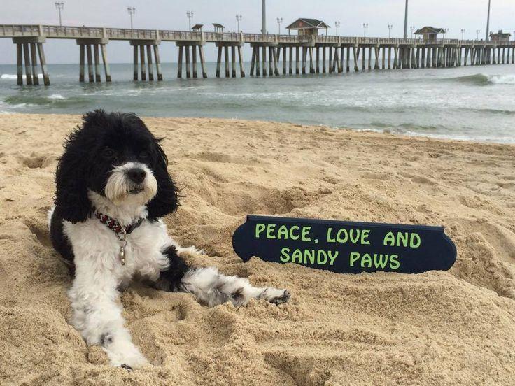 Outer Banks Nc Dog Friendly Restaurants