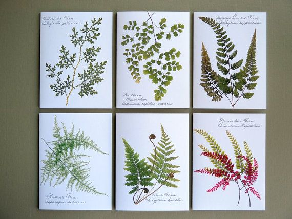 Set of 6 botanical pressed fern cards green by FlatFlowerDesigns