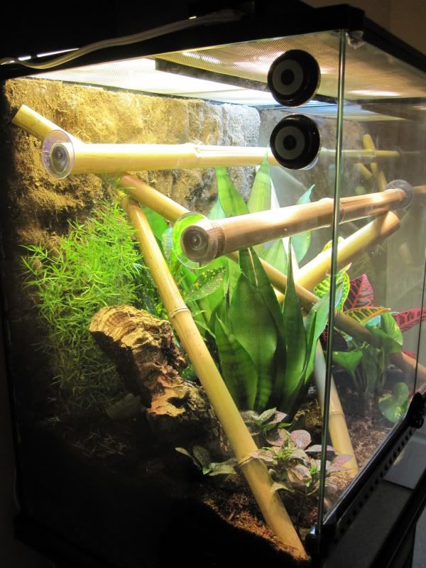 Is hot glue safe to use in a terrarium?   bearded dragon   Pinterest   Cups, Terrarium and Bamboo