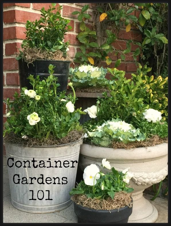 Container Garden for Spring - learn how to create a beautiful long lasting grouping of container plants.