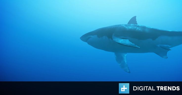 Curiscope's 'Operation Apex' great white shark experience is coming to HTC Vive