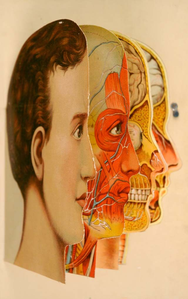 Animated Anatomies, An Exhibition of Antique Medical Pop-Up Books