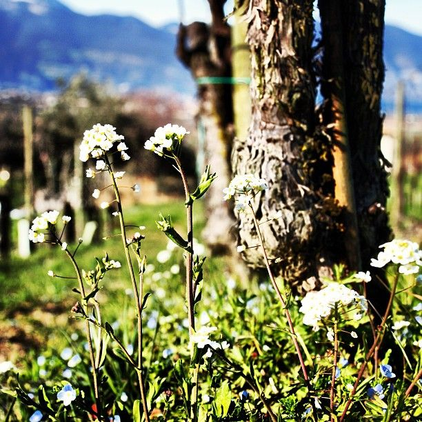 "Finalmente la primavera! #primavera #spring #springtime #fiori #fiore #flower #flowers"""