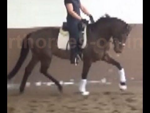 www.sporthorses-online.com 2012 Hanoverian dressage stallion for sale