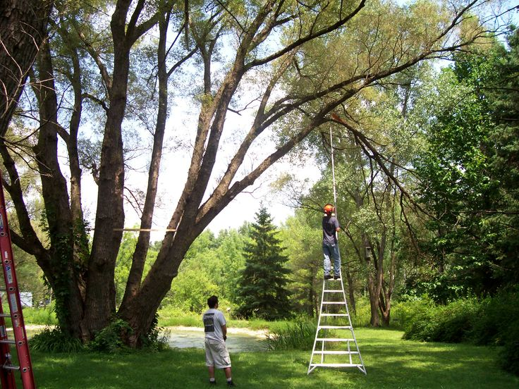 The experts of Treezy can help you to get the superior service to lop the branches in the perfect manner. #treelopping #treecutting