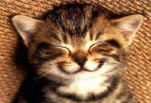 hate cats. LOVE kittys:): Smile Quotes, Happy Faces, Happy Kitty, Kitty Cat, Smile Animal, Funny Cat, The Faces, Funny Animal, Sweet Dreams