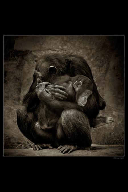 monkey mama and babyMothers And Child, Monkeys Mama, I Love You, Monkeys Trouble, Baby 3, Beautiful, Art, Children, Blog