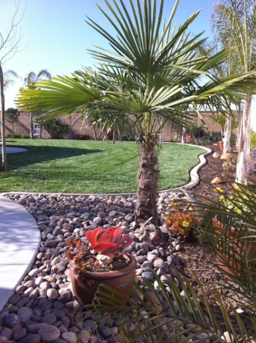 entracing palm tree type house plant. One of our homeowners Harry  built this lush oasis and palm trees are great for dryer climate areas like 123 best Palm Trees images on Pinterest Beautiful