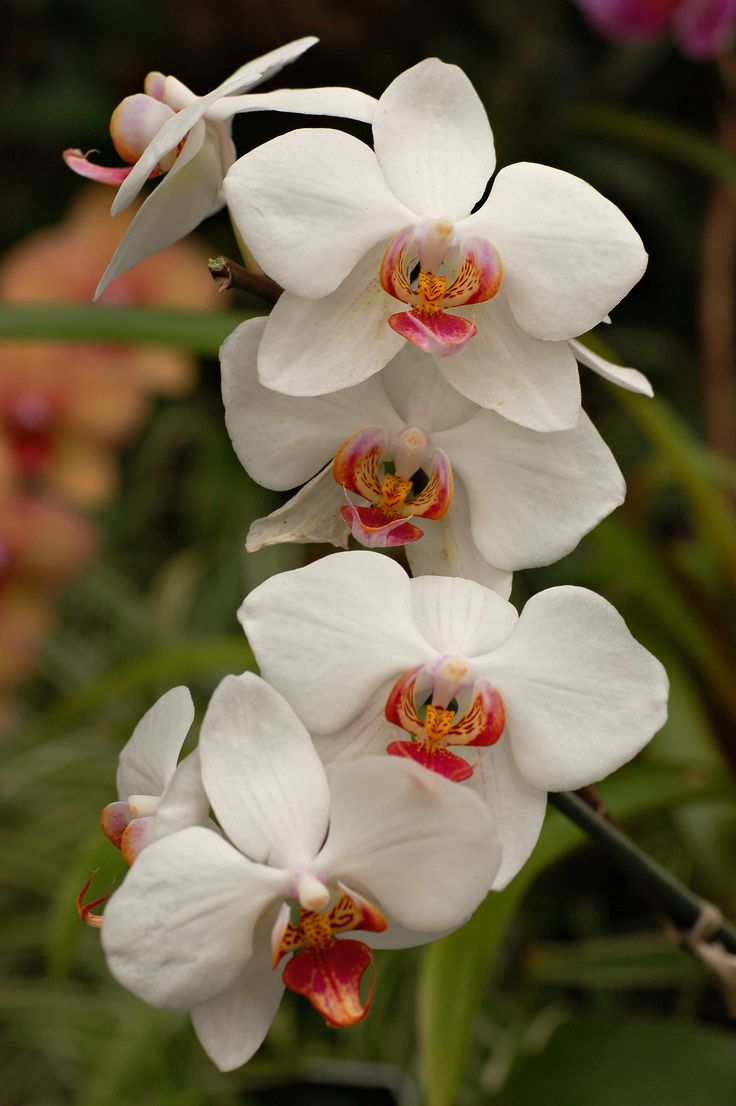 12 best flowers images on pinterest nature flowers and google 100 types of the most beautiful white flowers for your garden dhlflorist Images