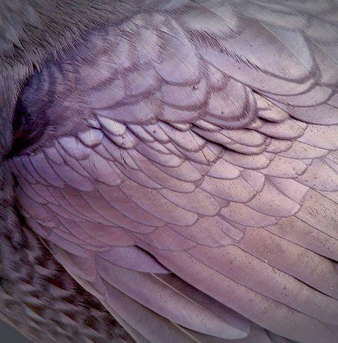 purple and soft http://24.media.tumblr.com/9374f05e8c2b86756a3e5d495435492f/tumblr_mn79aqQEj21rrsl5ho1_500.jpg