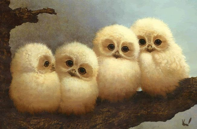 Illustrated & Animated Gif of Baby Owls